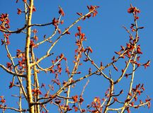 Sprouting tree branches Stock Photography