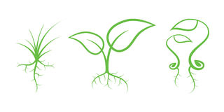 Sprouts. Green Nature Icons. Part 7 - Sprouts Stock Photo