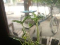sprouts fotografia de stock