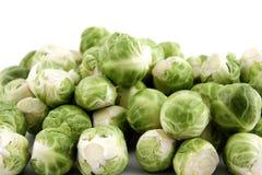 Sprouts foto de stock royalty free