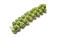 Sprouts Royalty Free Stock Photo
