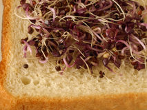 Sprouts. Salad sprouts on the bread Royalty Free Stock Photo