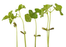 Sprouts Stock Images