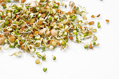 Sprouts Royalty Free Stock Photos