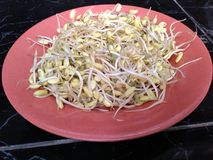 sprouts above the plate Stock Photo