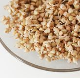 Sprouts And A Very Useful Buckwheat Stock Image
