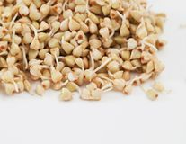 Sprouts And A Very Useful Buckwheat Royalty Free Stock Photo