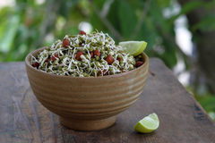 Sprouts in a bowl Stock Photos