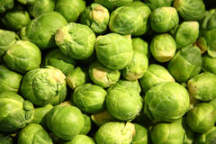 Sprouts brussel Stock Photo