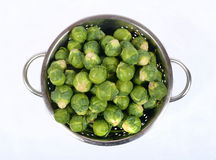 Sprouts bruxell Stock Photography