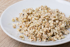 Sprouts of buckwheat groats on dish Royalty Free Stock Photo