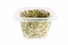 sprouts comestíveis do Alfa-alfa Imagens de Stock Royalty Free