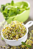 Sprouts in cups. Fresh alfalfa and sunflower sprouts in cups Stock Photo