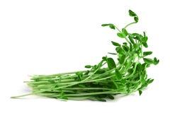 Sprouts da ervilha de neve Imagem de Stock