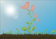 sprouts da ilustração do vetor, estágios   ilustração do vetor