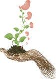 sprouts da ilustração do vetor, estágios do desenvolvimento ilustração do vetor