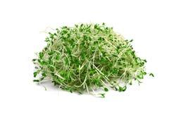 Sprouts de alfalfa Fotos de Stock Royalty Free