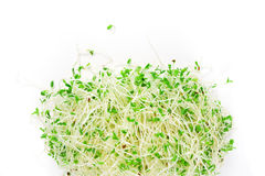 Sprouts de alfalfa Fotos de Stock