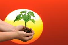 Sprouts de amanhã Foto de Stock Royalty Free