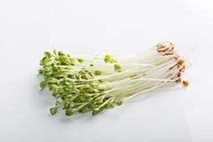 Sprouts de feijão Foto de Stock Royalty Free