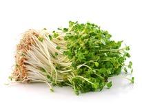 Sprouts de feijão Fotografia de Stock