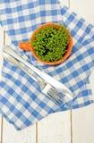 Sprouts do agrião em um copo, em uma forquilha e em uma faca alaranjados Fotos de Stock
