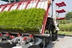 Sprouts do arroz em plantar a máquina Foto de Stock