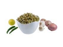 Sprouts do grama verde em uma bacia Fotos de Stock Royalty Free