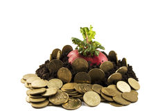 Sprouts do radish do dinheiro Imagens de Stock