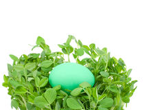 Sprouts and egg Royalty Free Stock Images