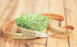 Sprouts with Flexible Measuring Tape Royalty Free Stock Photography