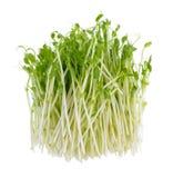 Sprouts frescos da ervilha verde Fotografia de Stock Royalty Free