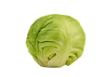 Sprouts Stock Photography