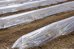 Sprouts greenhouse glass house plastic lines stock photo