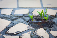 Sprouts growing from the pavement Royalty Free Stock Photography