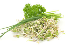 Sprouts and herbs Stock Photos