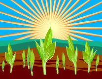 Sprouts illustration. The turning green germ of a cereal sprouts towards to the sun Royalty Free Stock Images