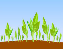 Sprouts illustration. The turning green germ of a cereal sprouts towards to the sun Stock Image