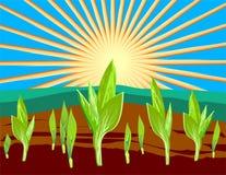 Sprouts a ilustração imagens de stock royalty free