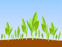 Sprouts a ilustração imagem de stock