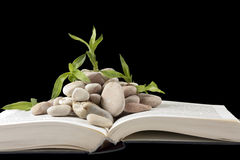 Sprouts of knowledge Stock Photos