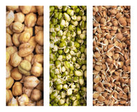 Sprouts, Lentils and Chickpeas Stock Photo