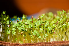 Sprouts of Life Royalty Free Stock Photos