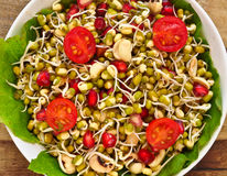 Sprouts- mung beans/green gram Stock Images