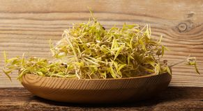 Sprouts of mung beans royalty free stock photography