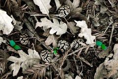 Sprouts nas folhas Imagem de Stock Royalty Free