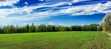 Sprouts novos no campo ploughed Imagens de Stock Royalty Free