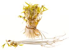 Sprouts Of Mung Beans Stock Photography
