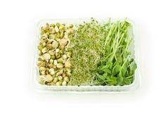 Sprouts orgânicos Imagens de Stock