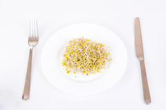 Sprouts on a plate Stock Image